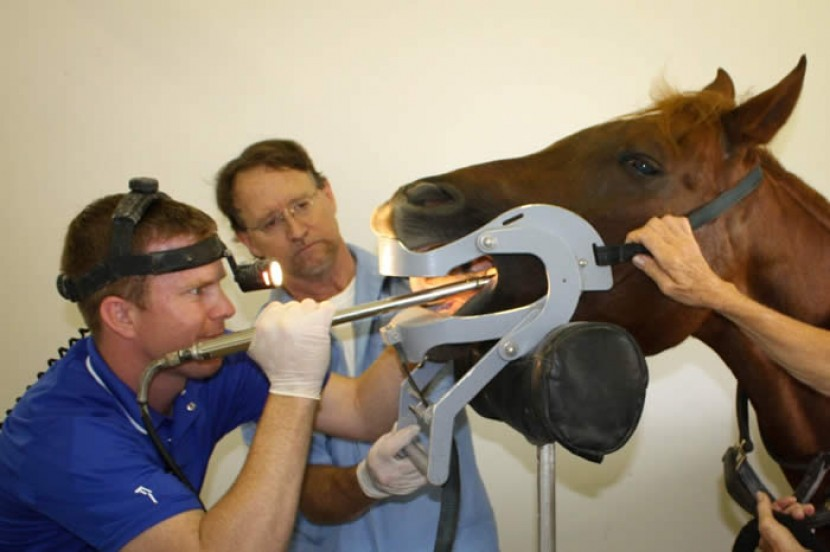 Equine Dentistry Now Available at EMCO